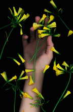 Female Hand Behind Yellow Flower