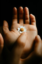 Finger Delicately Touching A Small Daisy