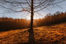 Sun Through The Branches Of A ...