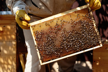 Crop Man Holding Board With Bees