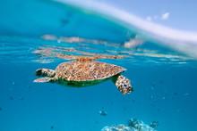 Underwater Shot Of Turtle