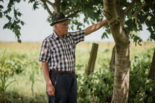 Pensive Senior Man Under Tree ...