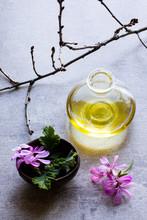 Geranium Plant Oil