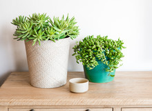 Potted Plants For The Home.