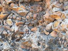 Oranic Matter Traped In Rocks
