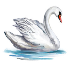 White Swan Bird On The Pond, Art Illustration Painted With Watercolors Isolated On White Background