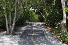 Pathway Surrounded By Green Scenery In Sanibel Island, Miami, USA