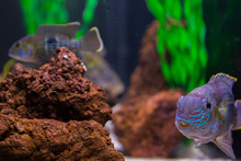 Big And Small Colorful Fish In...