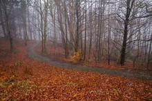 Small Path In The Forest Cover...