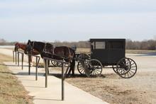 Amish Living 2019 II