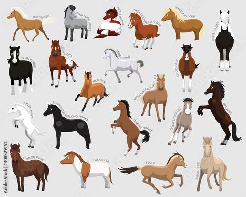 Fototapeta Horse Set Various Kind Identify Cartoon Vector obraz