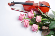 Violin, Bow And Five Pink Rose...