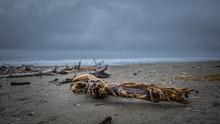 Dried Tree On Sand Sea Beach