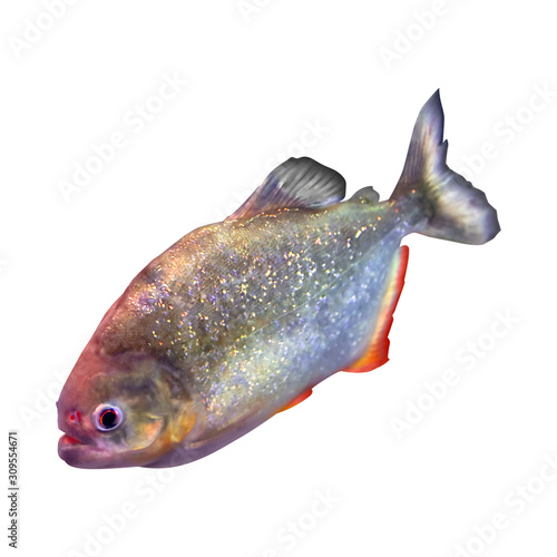 Bright shiny piranha fish on white background Fototapet