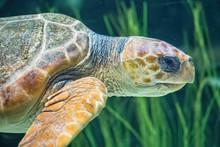 Sea Turtle At Close Range On The Green Ocean Floor