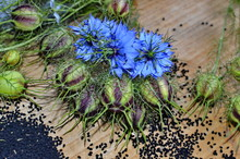 Black Cumin (nigella Sativa Or...