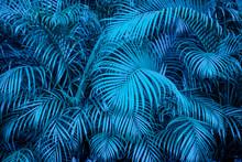 Tropical  Backgound - Blue Pal...