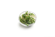Organically Grown Microgreens In Glass Plate Isolated On White