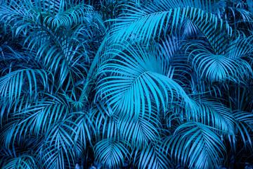 Panel Szklany Do jadalni tropical backgound - blue palm tree leaf pattern