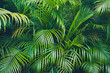 canvas print picture tropical plant backgound - palm tree leaves
