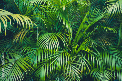 tropical plant backgound - palm tree leaves