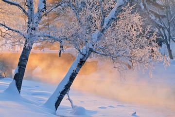 Fototapeta Drzewa Foggy winter landscape with frosted trees at sunrise Portage Creek, Milham Park, Kalamazoo, Michigan, USA