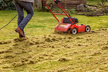 Dethatching The Lawn With An E...