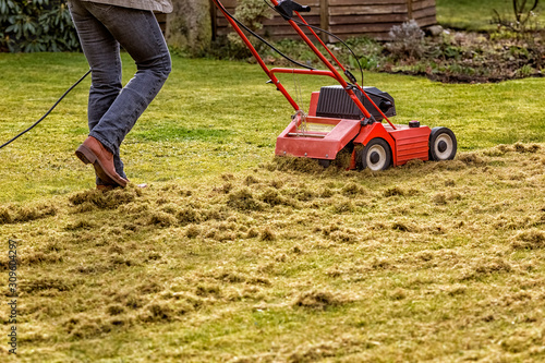 Fototapeta Dethatching the Lawn with an Electric Dethatcher