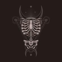 Skeleton Torso Poster. Stylish...