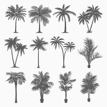 TROPICAL PALMS VECTOR SET