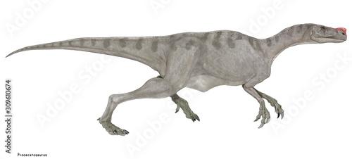 プロケラトサウルス ジュラ紀中期にヨーロッパに生息していた肉食恐竜。鼻筋に鶏冠を持つことからケラトサウルスの祖先とされていたが、のちにティラノサウルス上科に新た Canvas Print