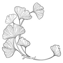Corner Branch With Outline Gingko Or Ginkgo Biloba Ornate Leaf In Black Isolated On White Background.