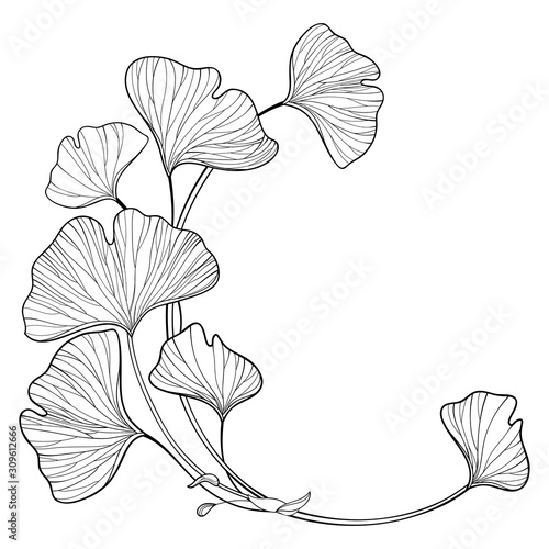 Corner branch with outline Gingko or Ginkgo biloba ornate leaf in black isolated on white background Obraz na płótnie