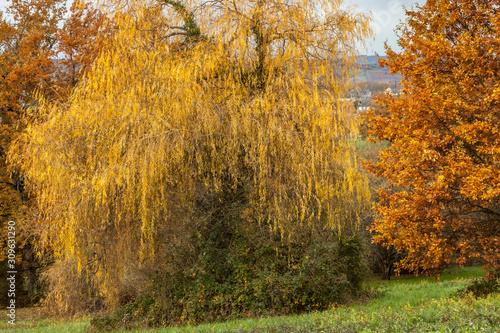 Allassac (Corrèze, France) - Pont Salomon - Vue automnale  © PhilippeGraillePhoto