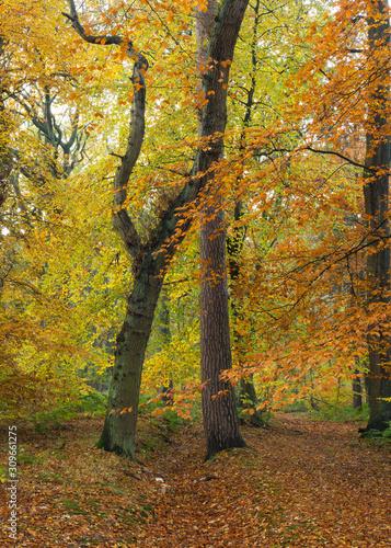 Autumn Woodland Landscape view. Gosforth. North East England. UK.  © coxy58