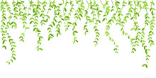 Hanging Plants With Green Leaves. Simplistic Foliage Border. Vertical Isolated Vector Decoration.
