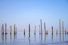 Sea Birds On Poles Reflection ...