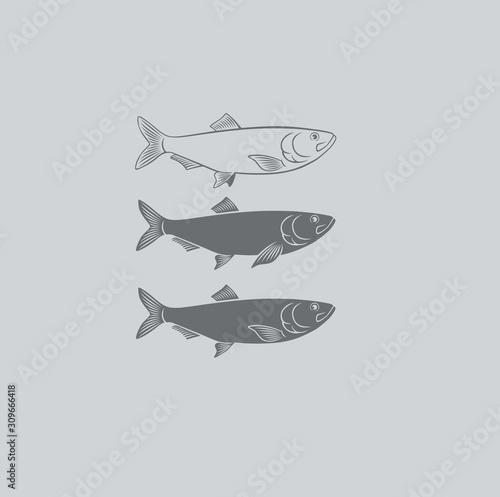 Fotografie, Obraz fish herring
