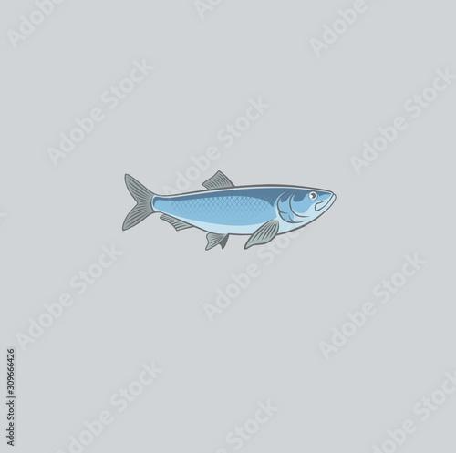 Fényképezés fish herring