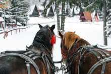Horses And Carriage In Winter