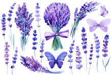 Set Of Watercolor Purple Butterflies, Bouquet, Lavender Flowers  On An Isolated White Background, Hand Drawing, Flora Design