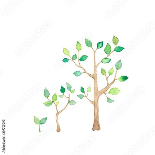 Obraz 樹木の成長 - fototapety do salonu