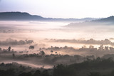 fog over forest in mountain - 309712064
