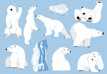 Simple White Bear Character.Ve...