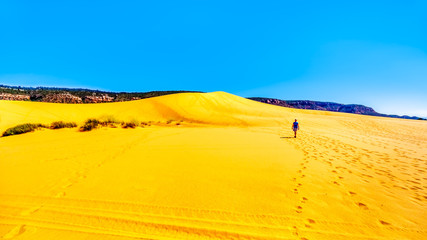 Active Senior Woman hiking the Sand Dunes in the Coral Pink Sand Dunes State Park along Vermilion Cliffs in Kanab County in Utah, United States