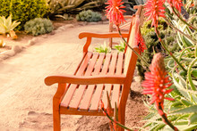 Aloe Flowers And Bench.