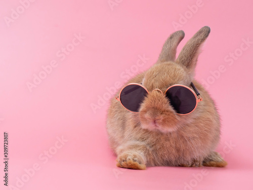 Stampa su Tela Red-brown cute baby rabbit wearing glasses sitting on pink background