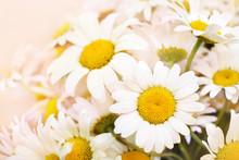 Summer Blossoming Daisies, Cha...