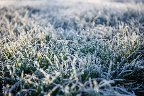 Morning dew froze on a green grass lawn and turned it into a white blanket Canvas Print