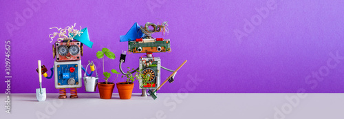 Fototapeta Two gardener steampunk toys with a strawberry bush grown in a flower pot. Automated robotic gardening concept. violet gray background. copy space obraz